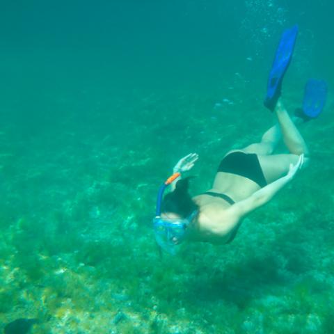 Aventura Snorkeling
